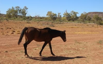 Equestrian Stables: Same Quality, Different Pilbara Shed Product